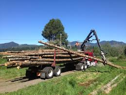 Logging 101 | PeaceCrops China Wood Transport For Forest Logtimber Truck Trailers Sale Self Loader Log For Best Resource Mounts Bucket Of The Future All Access Equipment 6x4 Howo Sinotruk Selfloader 20ft Container Trailer Sidelifter Logging Image American Lands Washington Company Llc 21410 Se 248th Forestry Maine Financial Group Tow Truck 2015 Serco 160 Spokane Wa 8537902 Petersen Industries Lightning Grapple Trucks Loading Concrete Mixer Available Resale In Raipur Argo