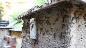 gefräßige raupen riesige schwammspinner plage in süddeutschland