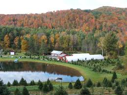 Christmas Tree Shop Salem Nh by Nursery And Christmas Tree Farm