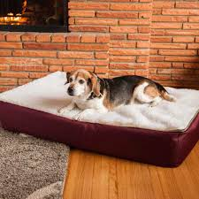 Extra Large Orthopedic Dog Bed by Super Orthopedic Lounge Dog Bed W Cream Sherpa Snoozer