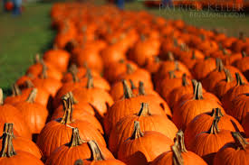 Chesterfield Pumpkin Patch 2015 by Pumpkins And The Annual Trip To Rombachs Farm 2014 The Big Séance
