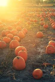 Spring Hope Pumpkin Festival 2014 by 25 Best Pumpkin Farm Ideas On Pinterest A Maze In Corn Farm