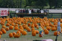 Flower Mound Pumpkin Patch Flower Mound Tx by Acres Of Pumpkins Business Denton Record Chronicle