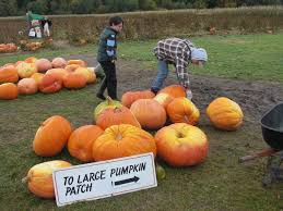 Snohomish County Pumpkin Patches by Pumpkin Patch Gardening In My Rubber Boots
