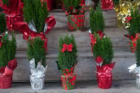 Nyc Christmas Tree Disposal 2015 by Christmas Tree Removal Nyc Christmas Lights Decoration