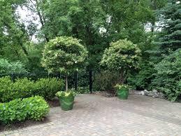 The Caliente Geraniums