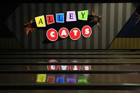 alley cats arlington alley cats