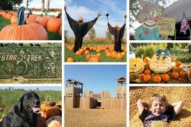 Pumpkin Farms In Channahon Illinois by Chicago Area Pumpkin Patches 40 To Choose From Chicago Tribune