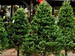 Christmas Tree Farm Near Lincoln Nh by Where To Buy A Christmas Tree Around Newton Newton Ma Patch