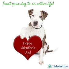 Why Not Show Your Canine Valentine How Much You Love Them Too And