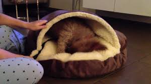 milia s cozy cave dog bed review youtube