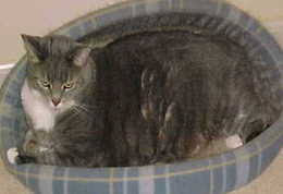 my cat has dandruff review causes of cat dandruff cat health behavior
