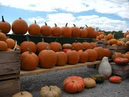 Pumpkin Patch Western Massachusetts by 7 Best Pumpkin Patches In West Virginia This Fall