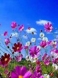 Beautiful Flower Wallpaper For Mobile Download