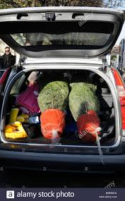 Best Christmas Tree Type Uk by Uk Christmas Trees For Sale At Columbia Road Market Shoreditch
