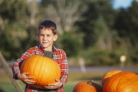 Eastern Iowa Pumpkin Patches by Pumpkin Patches Near Downers Grove Il Oakbrook Toyota