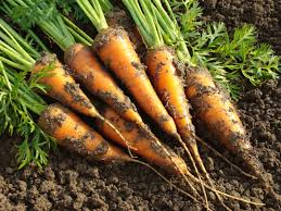 """ELCA World Hunger  Blog Archive Top Fall Tips for """"Growing"""" Your"""