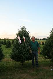 Fraser Christmas Tree Farm by Wctpa Tree U0026 Wreath Contest Convention Growers Meeting