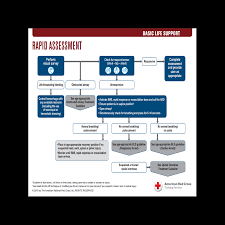 BLS Treatment Guidelines | Red Cross Store