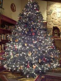 Frasier Christmas Tree Cutting by Kuhns Tree Farm