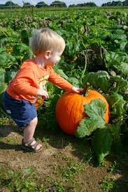 Pumpkin Patch College Station 2014 by Triplets Toddler September 2014