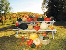Central Wisconsin Pumpkin Patches by Pumpkin Varieties You Won U0027t See In The Pumpkin Patch Farm And
