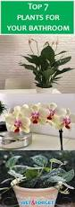 Best Plant For Bathroom Feng Shui by Ask Wet U0026 Forget Bathroom Plants That Thrive With Or Without