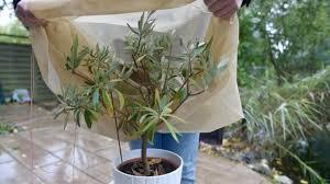 herbstlich kalt so schützt topfpflanzen in kalten nächten