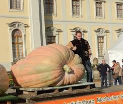 Atlantic Giant Pumpkin Record by Giant Pumpkin Growing Tips From The Pumpkin Man October 2016