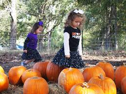 Nearby Pumpkin Patches by The Best Birmingham Pumpkin Patches