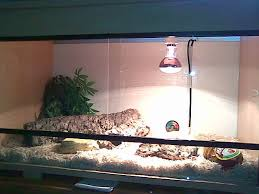 Reptile Heat Lamps Safety by Snake Heat Lamp Lighting And Ceiling Fans