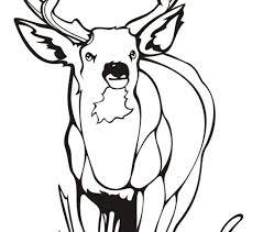 Deer Color Pages Coloring Best Adresebitkisel