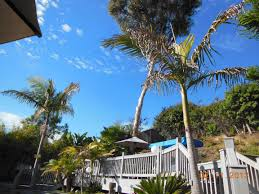 California Beaches Palm Trees Wallpaper Inspirational Tropical Backyard Paradise Bring The Pets Pool Deck Spa Garden