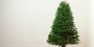 How To Care For And Keep Your Christmas Tree Alive