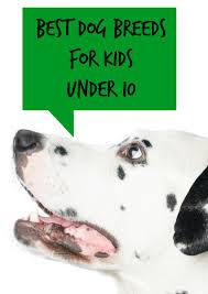 Non Shedding Dog Breeds Kid Friendly by Best Dog Breeds For Kids Under 10 Dogvills