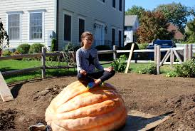 Pumpkin Patch Greenwich Ct get a load of this giant pumpkin in byram greenwich free press