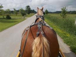 Stoney Creek Pumpkin Patch Ohio by Stony Brook Belgians And Draft Horse Training On Equinenow