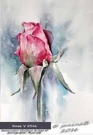 Rose V 2016 Watercolour 20x26cm Arches CP CjaninaB