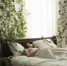 nasa empfiehlt diese 5 pflanzen reinigen die luft in deiner
