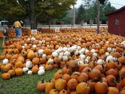 Rombachs Pumpkin Patch Hours by 39 Best Halloween Thanksgiving Fall Pumpkin Farms U0026 Patches
