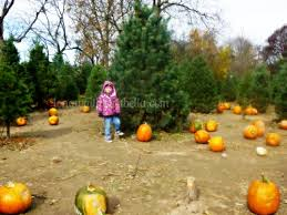 Noblesville Pumpkin Patch christian pumpkin carving long wait for isabella