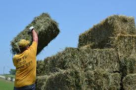 The Hay Is Baled   Eden Hills Top Country Wedding Songs Gac The Hay Is Baled Eden Hills Passionettes And Albany State Band Fight Songhay In The Middle Hauling Hay 1950s Farm Scenes Pinterest Bethunecookman University Lets Go Wildcatshay In Hd Youtube Haystack Lounge Decor My Wife Yvette Decor Best 25 Barn Party Decorations Ideas On Wedding Environmental Art Archives Schuylkill Center For Mchs Presidents Page Miller County Museum Historical Society Just Me June 2013 Pating Unique Bale Of Bales Straw