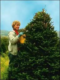 Willeys Christmas Tree Farm