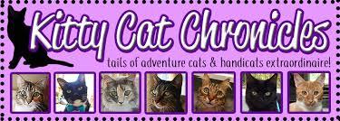 kitty cat kitty cat chronicles tails of adventure cats handicats