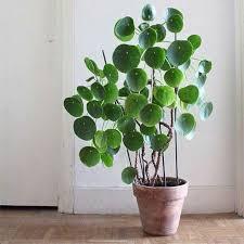 plante de bureau plant plantes et bureau plantes
