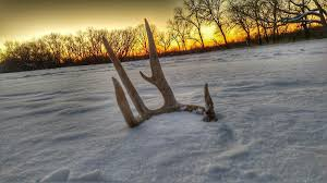 Shed Hunting Utah 2017 by Shed Hunting Gear