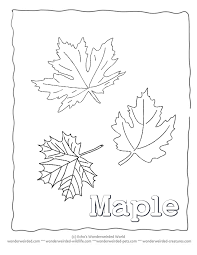 Pictures Of Maple Leaves To Color Leaf Coloring Sheets Printable Collection Wonderweirded Wildlife