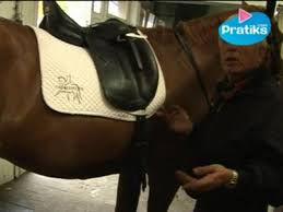 equitation comment seller un cheval selle de dressage pratiks