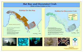 Decorator Crabs And Sea Sponges by Mate 2003 Gis Institute Curriculum Products