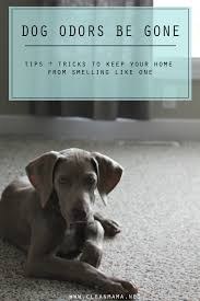 Dogs That Dont Shed And Smell by Dog Odors Be Gone Clean Mama